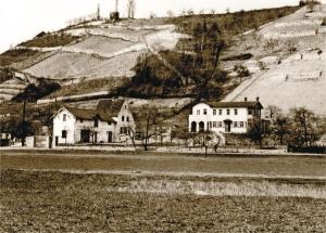 steinmeister1952[1]