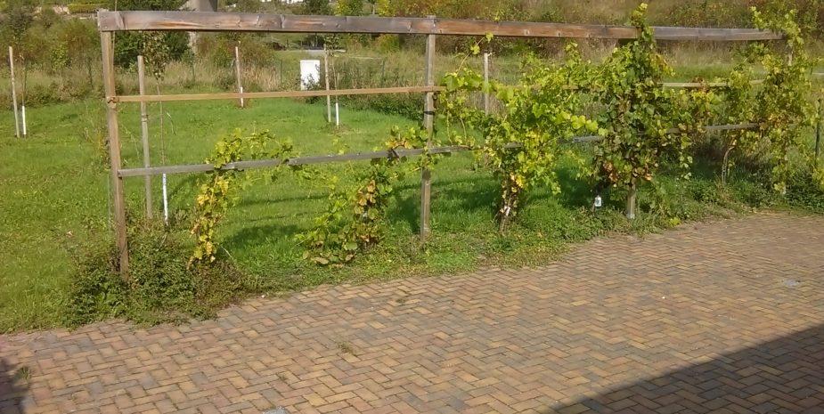 Ferienhaus Ehrauberge Parkplatz für das Auto, Weinpergola
