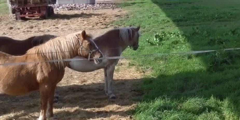 Ehrauberge Impressionen, nette Pferde in der Nachbarschaft